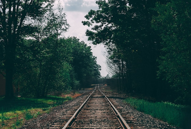 Beautiful shot of a train track surrounded by trees