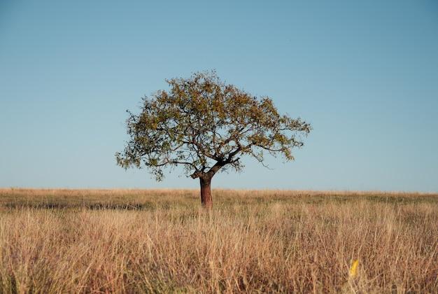 Bellissimo scatto di un albero in un campo