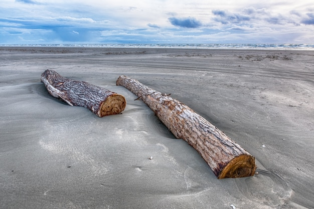 Beautiful shot of tree logs laying in sand at the beach under the cloudy sky