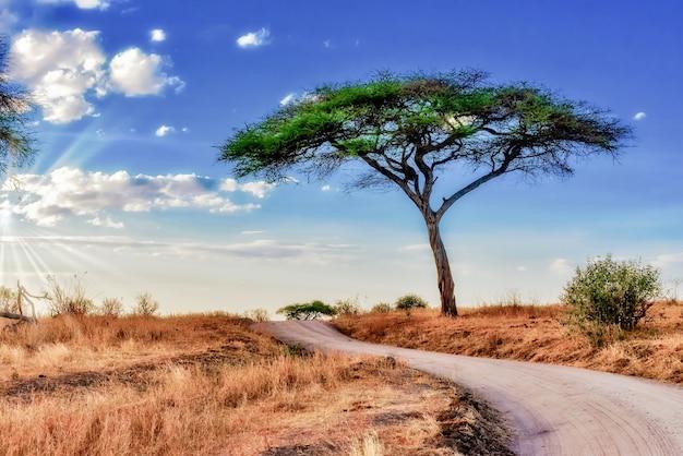 Bella ripresa di un albero nelle pianure della savana con il cielo blu