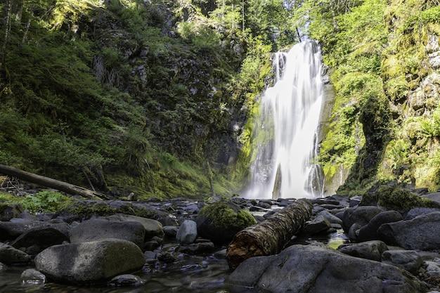 Bello scatto di una cascata in una foresta verde brillante