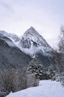 Beautiful shot of a winter fir forest near mountains