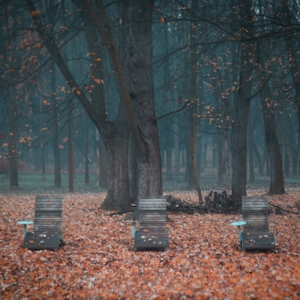 Beautiful shot of wooden chairs in a scary forest