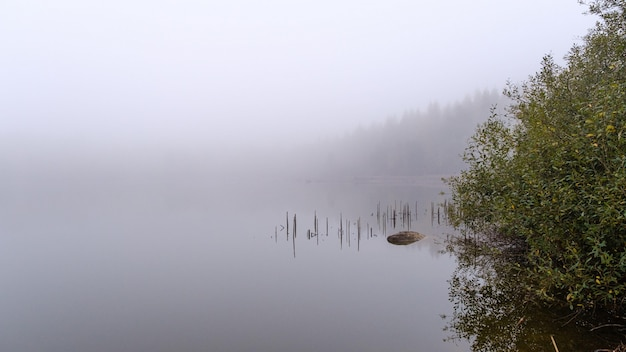 Beautiful shot of a wooden pier reflected in the sea surrounded by trees covered with fog