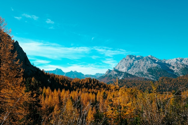 Beautiful shot of yellow trees and mountains with blue sky
