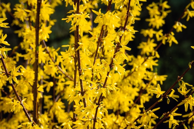 Bellissimo colpo di fiori di campo gialli
