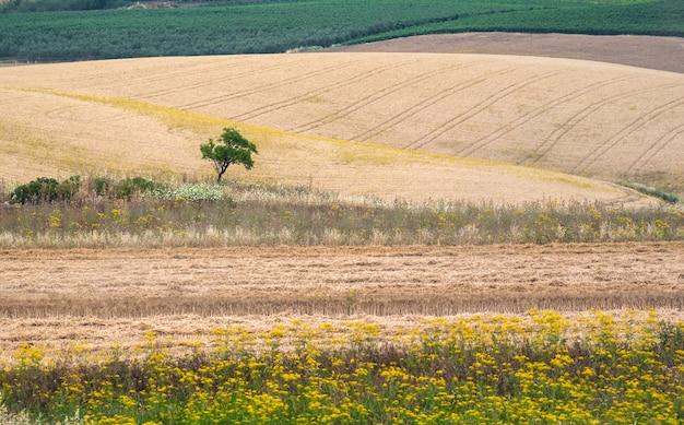 Beautiful sicilian field landscape