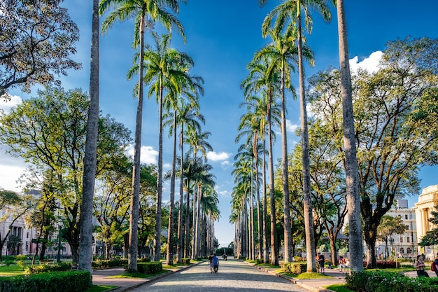 Beautiful sidewalk among the tall palm trees under a sunny sky in brazil