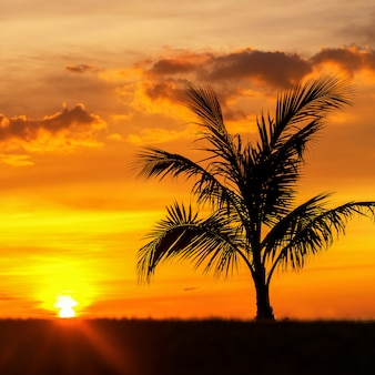 Beautiful silhouette coconut palm tree on sky neary sea ocean beach at sunset or sunrise time for leisure travel and vacation concept