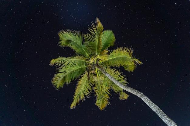 Красивый силуэт зеленых листьев пальмы на фоне черного неба ночью на острове занзибар, танзания, восточная африка. вид снизу