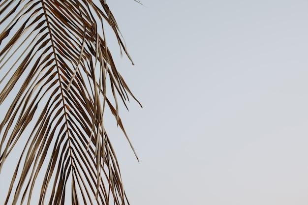 푸른 하늘에 대 한 열 대 코코넛 야 자 지점의 아름 다운 실루엣. 레트로 또는 빈티지 톤 필터로 미니멀리즘