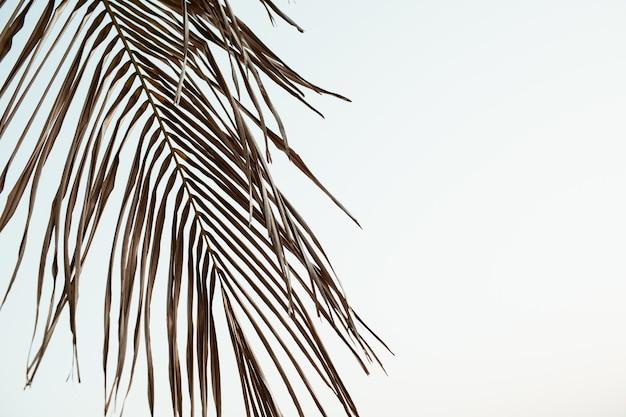 空を背景にトロピカルココナッツ椰子の枝の美しいシルエット。レトロまたはヴィンテージのトーンフィルターでミニマル