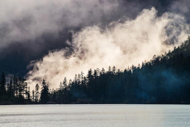 濃い霧の中の山の湖に沿って丘の中腹にある先のとがったモミのトップの美しいシルエット