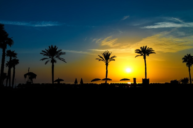 Beautiful silhouettes of palm trees and beach umbrellas at sunrise by the sea