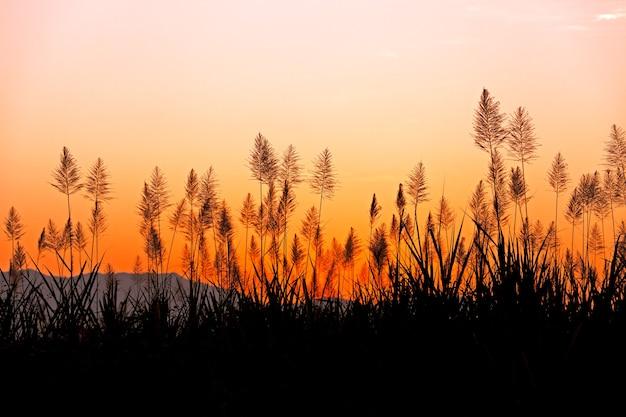열대 잔디 뒤의 아름다운 하늘