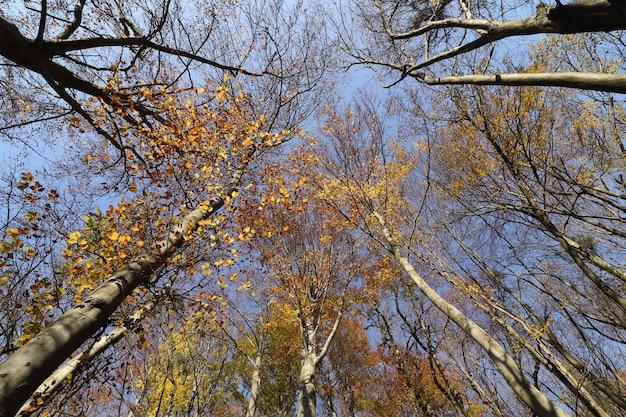 가을 숲에서 아름다운 하늘 풍경