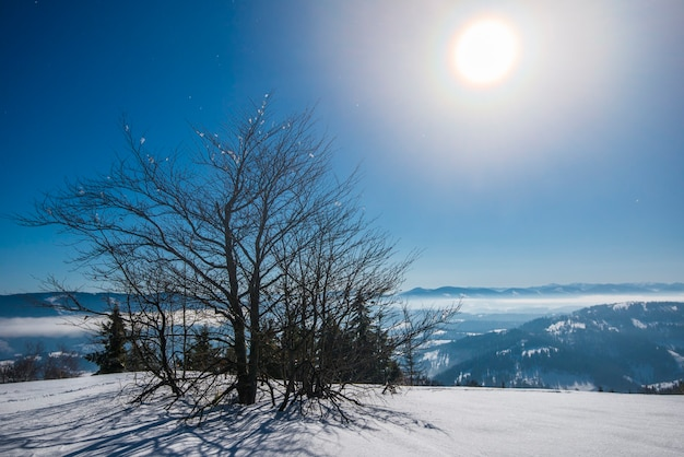 Beautiful slender fir trees grow among snow-covered snowdrifts on a hillside against of blue sky and bright moon on a frosty winter night. concept of resting outside the city in winter