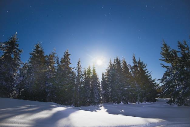 凍るような冬の夜、青い空と明るい月を背景に、丘の中腹にある雪に覆われた雪の吹きだまりの中に、美しい細いモミの木が生えています。冬に街の外で休むという概念