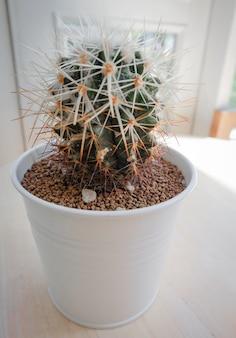 鍋に美しい小さなサボテンツリー