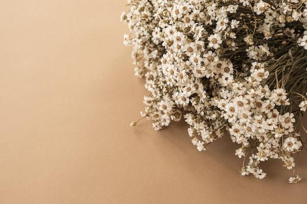 파스텔 베이지 복숭아에 아름 다운 작은 카모마일 데이지 꽃 꽃다발