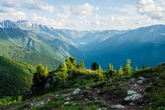 Beautiful small coniferous trees on rocky hill with view to snowy giant mountains and green forest valley with alpine lake and river. awesome alpine landscape of vast expanses. vivid highland scenery.