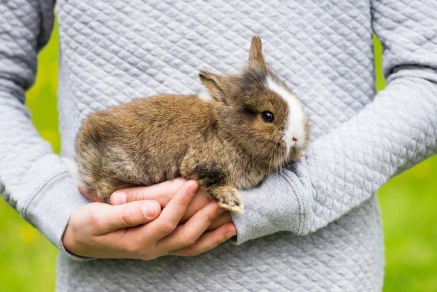 Красивый маленький кролик в руках девушки. защита и забота о природе концепции.