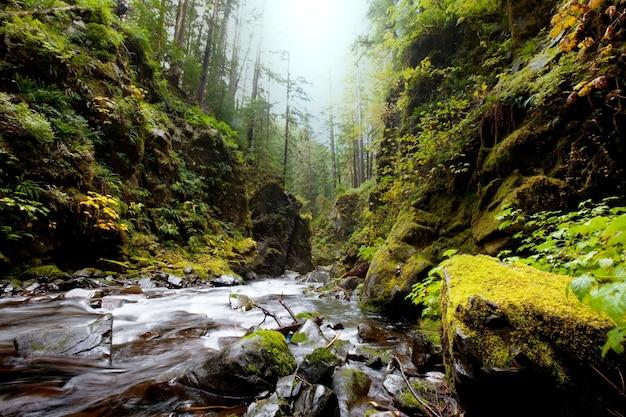 森の中の美しい小さな川
