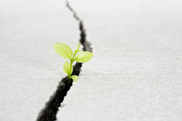 아름다운 작은 나무 식물은 금이 간 거리에서 자라며, 새로운 생명 성장 생태 개발