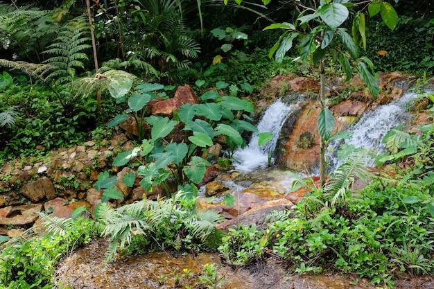 Красивый небольшой водопад на горе и ручей, текущий на скале тропического леса