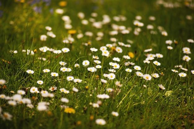 아름다운 작은 흰색 꽃, 봄 테마 컨셉