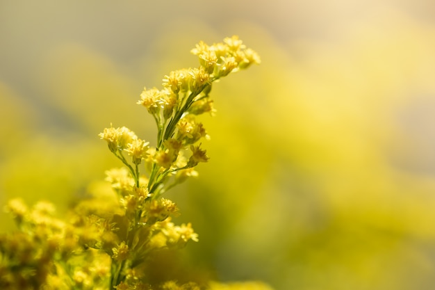 Beautiful small yellow flower with natural background