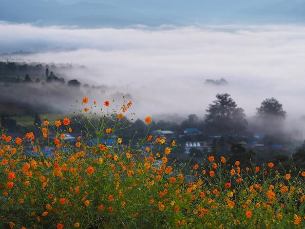 朝の霧の山の背景の上の美しい小さな黄色い花畑