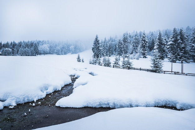 울창한 침엽수 snowcovered 숲의 벽에 의해 눈 더미의 아름다운 눈 파노라마