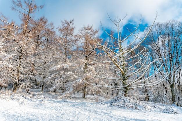 オイアルツンのartikutza自然公園の1月の美しい雪に覆われた森