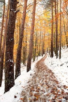 黄色い葉が付いている美しい雪の多い森