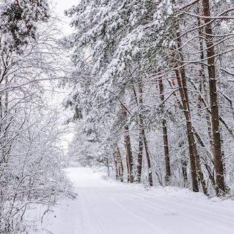 スキートラックのある美しい雪に覆われた冬の森の真っ白な道雪に覆われた木々や茂み