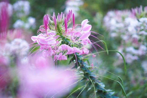 庭の日光と美しいクモの花