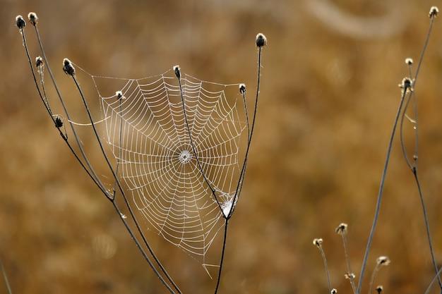 朝の最初の光で撮影された美しいクモの巣