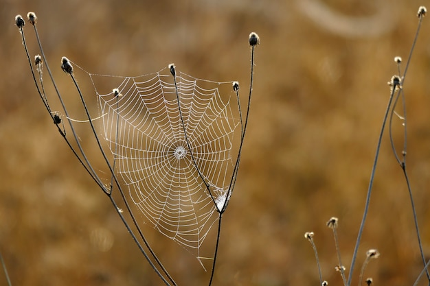 Beautiful spider web photographed at first light in the morning