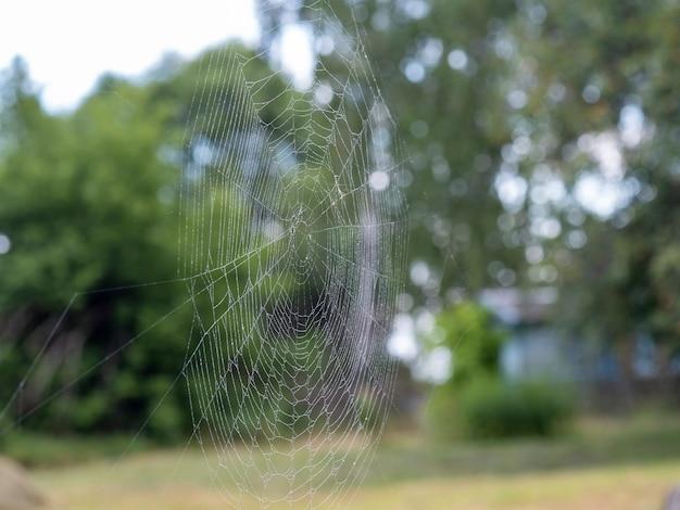 물으로 아름 다운 거미줄 클로즈업을 삭제합니다. 흐린 여름 풍경을 배경으로