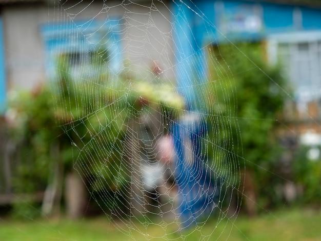 물과 함께 아름 다운 거미줄 클로즈업을 삭제합니다. 흐린 여름 풍경을 배경으로