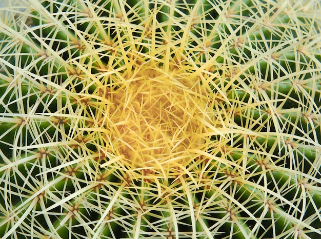 Beautiful of spiky green cactus covered in thorns textured.