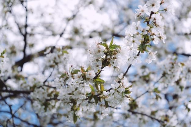 ミュンヘンのイングリッシュガーデンの美しい春の花。
