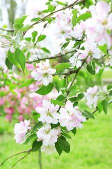 美しい春の花、屋外