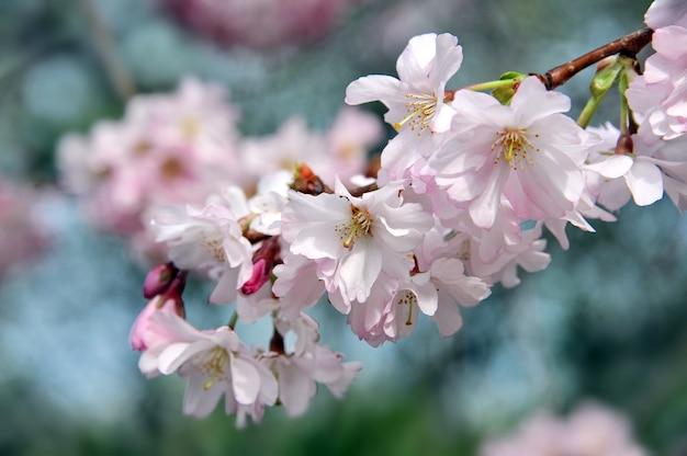 아름다운 봄 꽃