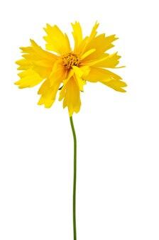 白い背景で隔離の美しい春の花