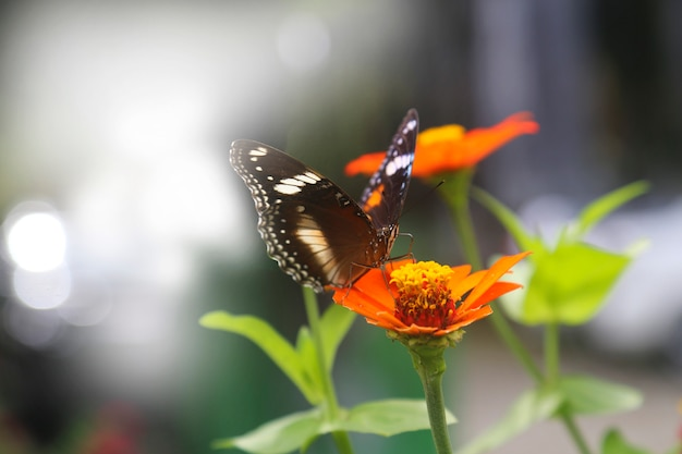 Beautiful spring flower with butterfly