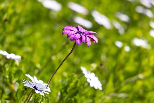 자연 속에서 아름 다운 봄 꽃