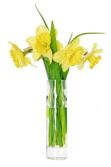 꽃병에 있는 아름다운 봄 꽃:오렌지 수선화(수선화). 화이트 이상 격리.