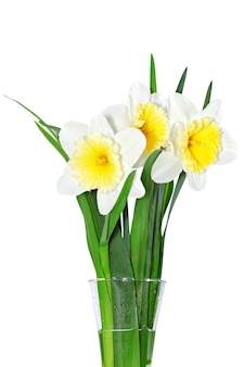 Beautiful spring flowers in vase: yellow-white narcissus (daffodil). isolated over white.